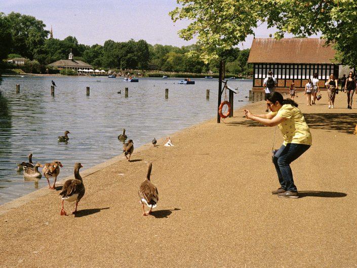 hyde park duck image