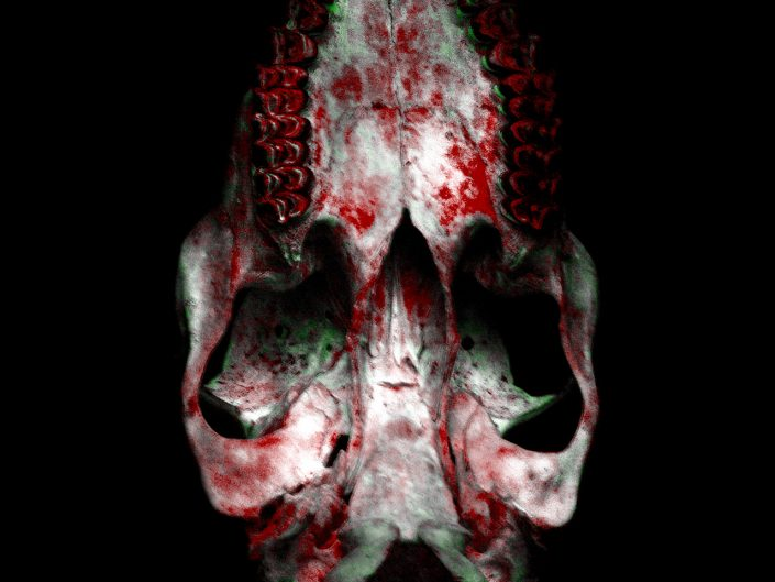 bottom of animal skull