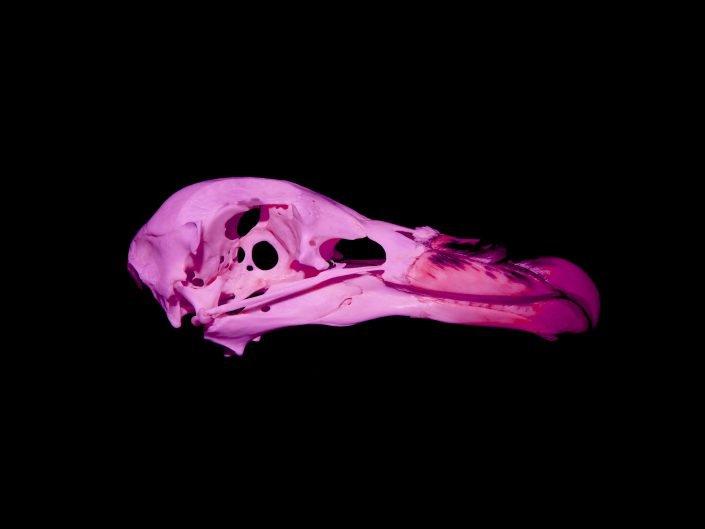 bird skull side ways